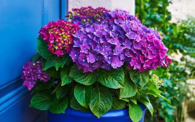 How Container Gardens Enhance Your Property's Curb Appeal